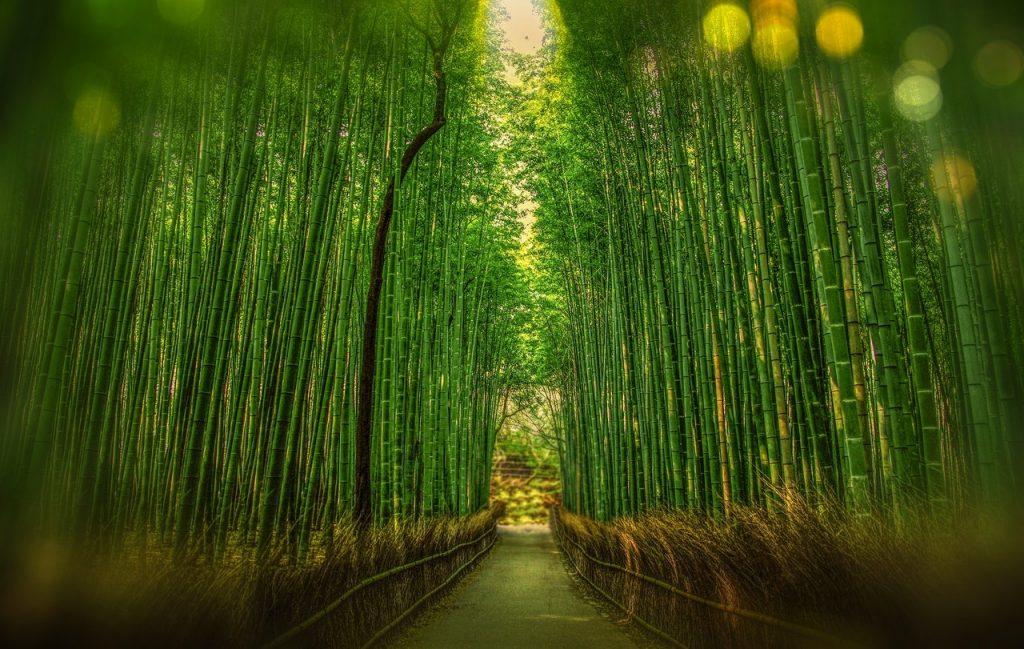 De kwaliteit van het bamboe hout